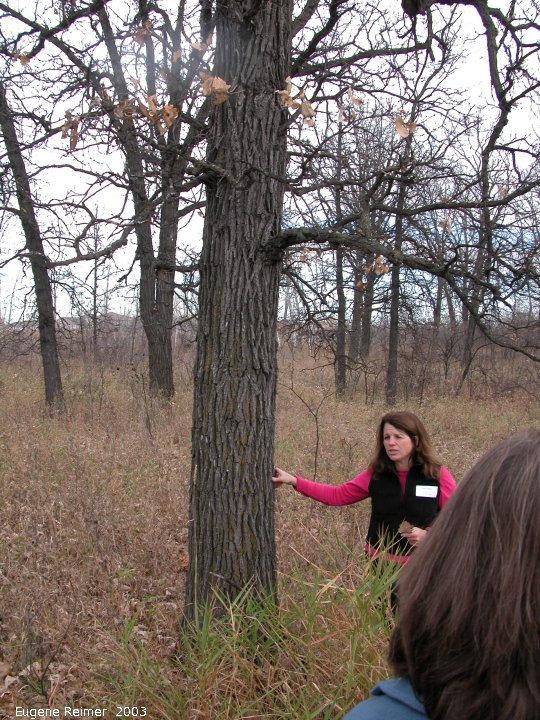 IMG 2003-Oct18 at BoisDesEsprits riparian forest on Seine River:  Cheryl Heming city-naturalist + Bur oak (Quercus macrocarpa)