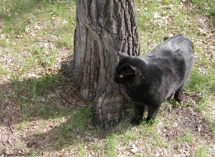 IMG 2004-May23 at DeanFinley Park:  Blackie watching