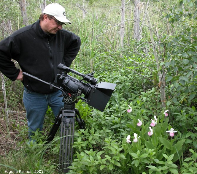 IMG 2005-Jun24 at Brokenhead Wetland Ecological Reserve SteadRd:  Keith takes video of Showy ladyslipper (Cypripedium reginae)