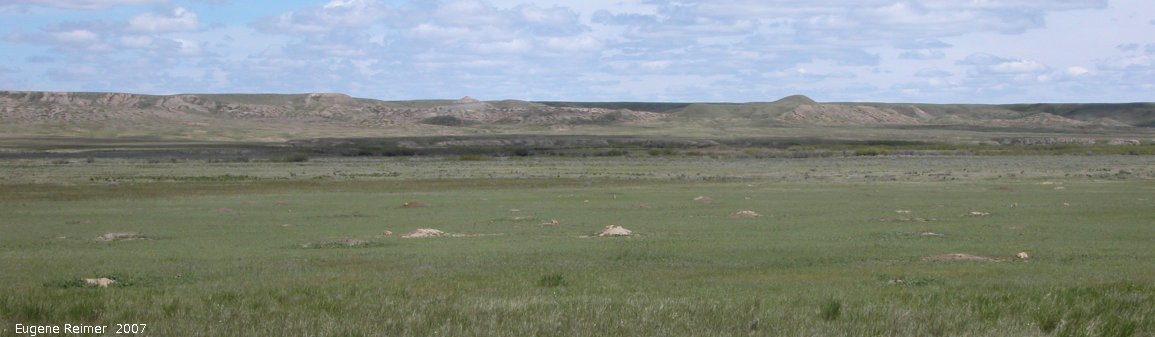 IMG 2007-May25 at Grasslands National-Park:  Black-tailed prairie-dog (Cynomys ludovicianus) colony wide view